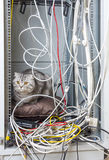 Cat in network cabinet Stock Photography