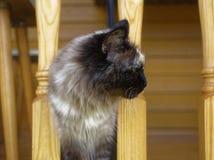Cat Neva-maskerade in de zomer in het land royalty-vrije stock foto's