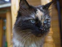 Cat Neva-maskerade in de zomer in het land stock foto