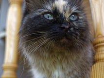 Cat Neva-maskerade in de zomer in het land royalty-vrije stock foto