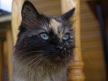 Cat Neva-maskerade in de zomer in het land stock foto's