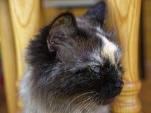 Cat Neva-maskerade in de zomer in het land royalty-vrije stock afbeeldingen