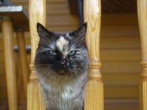 Cat Neva-maskerade in de zomer in het land royalty-vrije stock afbeelding