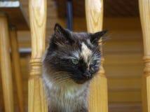 Cat Neva-maskerade in de zomer in het land stock afbeeldingen