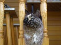 Cat Neva-maskerade in de zomer in het land royalty-vrije stock fotografie
