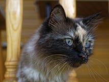 Cat Neva-maskerade in de zomer in het land stock afbeelding