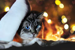 Cat New year stock photography
