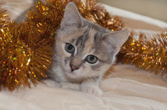 Cat for the new year. Beautiful cat in a Christmas garland Stock Photography
