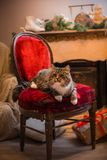 Cat, new year holidays, christmas, christmas tree, on a chair by the fireplace Stock Images