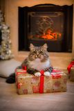 Cat, new year holidays, christmas, christmas tree Stock Photography