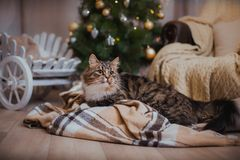 Cat, new year holidays, christmas, christmas tree Royalty Free Stock Photos