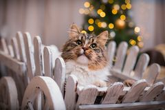 Cat, new year holidays, christmas, christmas tree Royalty Free Stock Image