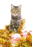 Cat in a New Year's tinsel. Cat in a New Year's golden tinsel Stock Photography