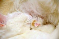 Cat with newborn kitten Stock Image