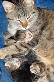 Cat with newborn kitten. Cat with newborn babies kitten sleeping together Royalty Free Stock Images
