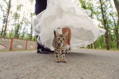 Cat and Newlyweds Stock Image