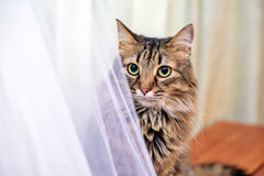 The cat next to the wedding dress royalty free stock photos