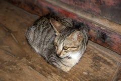 Cat at Nga Phe Chaung Monastery Myanmar Stock Photos
