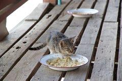 Cat at Nga Phe Chaung Monastery Myanmar Stock Image