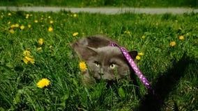 Cat Nice arkivfoto