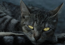 Cat in the night Royalty Free Stock Photos