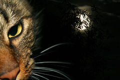 Cat at night. Cat face set against an eerie full moon Stock Photography