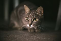 Cat At Night. A cat is in ambush Stock Photography
