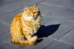 Cat_noble_style Stock Image