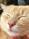 Cat Nose immagine stock libera da diritti