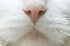 Cat Nose. Closeup of a cat's nose Royalty Free Stock Photography