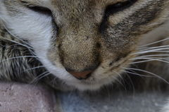 Cat Nose Stockbild