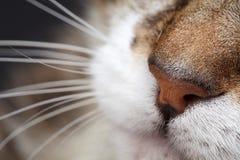 Cat Nose Stock Photos