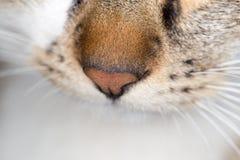 Cat Nose fine fotografia stock libera da diritti
