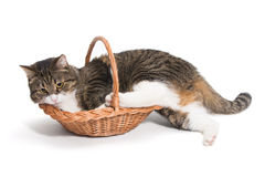 Cat is not placed in a basket Royalty Free Stock Photography