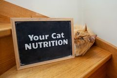 Cat nutrition issue depicted with ginger cat. Cat nutrition issue depicted with ginger cat and text on blackboard stock image