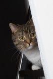 Cat observe. Cat hiding behind a wall, observing Stock Photos