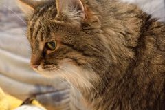 Little cat with attentive look stock image