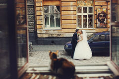 Cat observes just married on the street Royalty Free Stock Photography