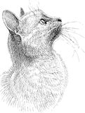 Cat observes Stock Image