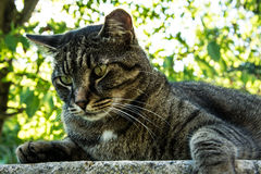 Cat observing nature Stock Photos