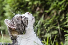 Cat observing it`s prey in a tree Royalty Free Stock Photography
