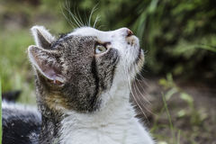 Cat observing it`s prey in a tree Royalty Free Stock Photos