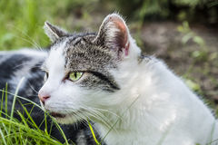 Cat observing it`s prey in a tree Royalty Free Stock Photo