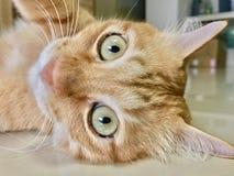Cat& x27; occhi di s Fotografia Stock Libera da Diritti