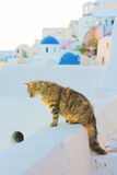Cat in Oia, Santorini Royalty Free Stock Images