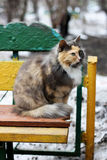 Cat on an old bench. Stock Photos
