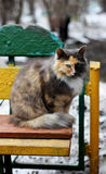 Cat on an old bench. Stock Images