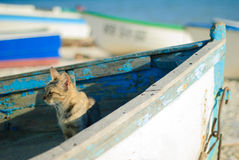 Cat on old boat looking towards Stock Image