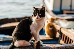 Cat on Old Boat Relaxing Stock Photography