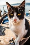 Cat on Old Boat Relaxing Royalty Free Stock Photography